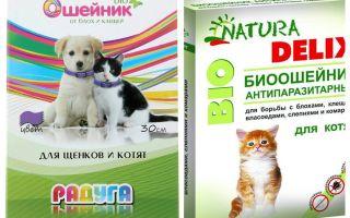 Flea Halsbänder für Kätzchen