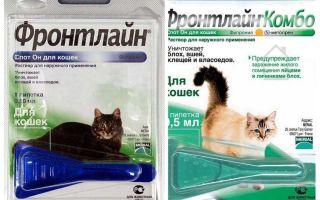 Frontline Flohtropfen für Katzen