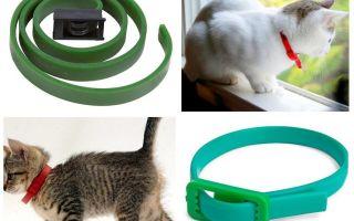 Die besten Floh- und Zeckenhalsbänder für Katzen