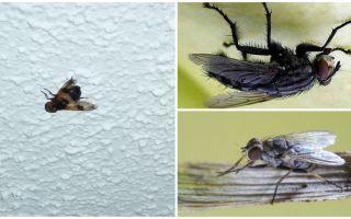 Wie eine Fliege sitzt und sich an die Decke klammert