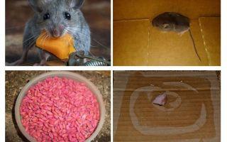 Wie man Mäuse aus der Garage holt