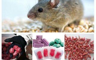 Gift für Ratten und Mäuse