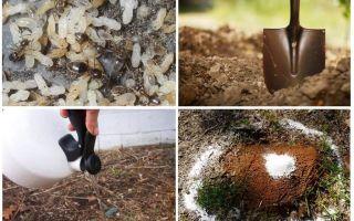 Wie man Ameisen aus den Garten-Volksheilmitteln holt