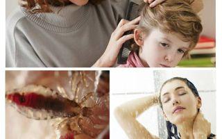Prävention von Pediculosis und Typhus