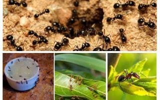 Vor welchen Ameisen haben sie Angst?