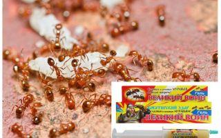 Abhilfe: Großer Ameisenkrieger
