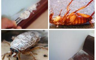 Überblick über Küchenschabenstäube