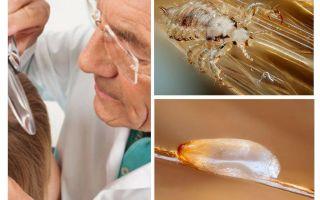 Untersuchung des Patienten auf Pedikulose in der Abteilung