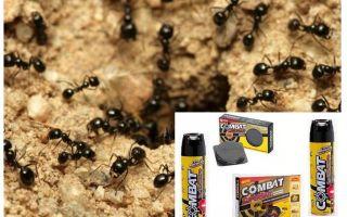 Ameisenbekämpfung Remedies