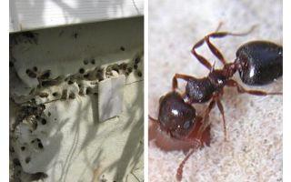 Ameisen leben in Isolation