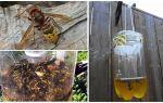 Hausgemachte Fallen für Hornissen und Wespen