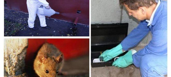 Vernichtung von Ratten und Mäusen durch spezialisierte Dienste