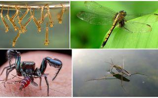 Wer isst Mücken?