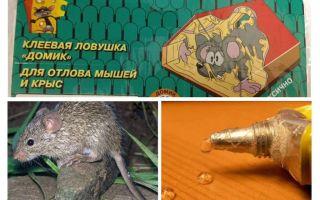 Kleber von Mäusen