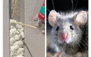 Mägen Mäuse Schaum