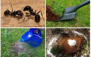 Wie man Ameisen in den Gartenvolksmitteln loswird