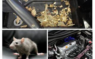 Wie man Mäuse aus dem Auto holt