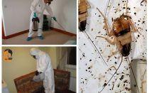 Vernichtung von Kakerlaken in der Wohnung