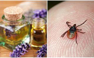 Ätherische Öle gegen Zecken