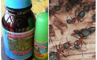 Bedeutet den Sommerbewohner von Ameisen