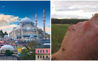 Gibt es Moskitos in der Türkei?