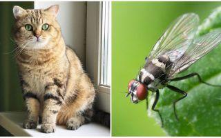 Was tun, wenn eine Katze oder Katze eine Fliege aß?