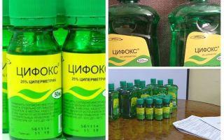 Cyclox Heilmittel für Wanzen