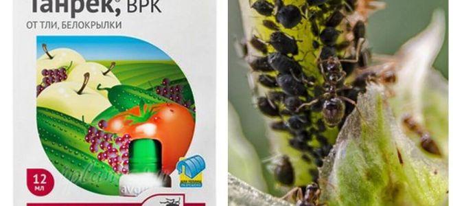 Tanrek Heilmittel für Blattläuse und Weiße Fliege