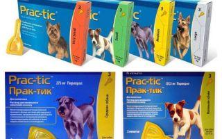 Drops Practices von Flöhen und Zecken für Hunde