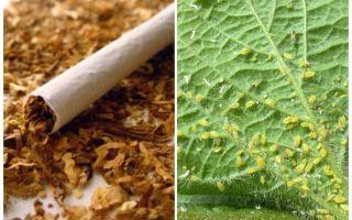 Tabak gegen Blattläuse