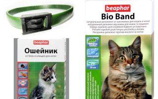 Halsband Beafar von Flöhen für Katzen und Hunde
