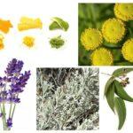 Folk Heilmittel für Lebensmittel Motten
