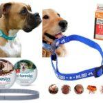 Flohhalsband für Hunde