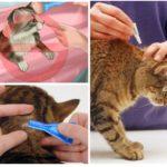 Tierbehandlungsregeln