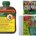 Heilmittel für den Borkenkäfer