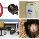 Installieren Sie den Repeller von Mäusen