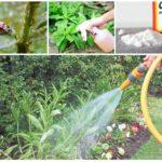 Insektenbekämpfungsmethoden