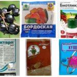 Chemikalien gegen Blattläuse