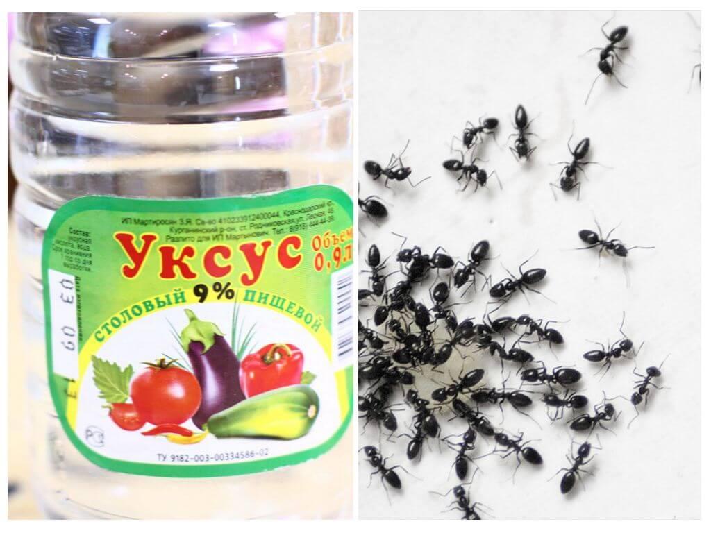 Essig Gegen Ameisen