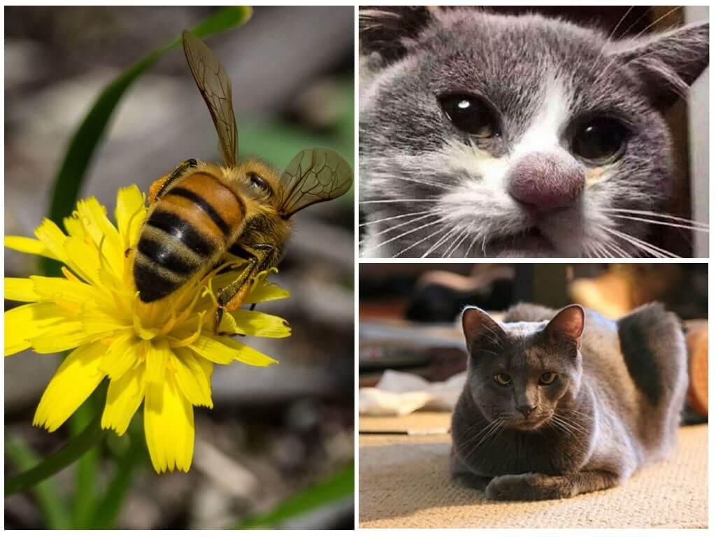 Bienenstich auf Katzen