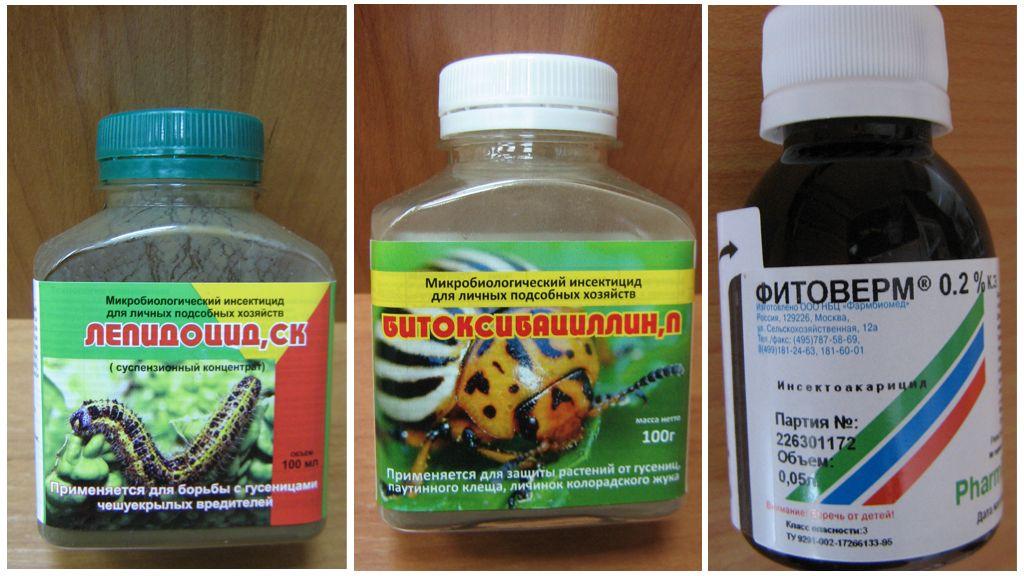 Biologische Wirkstoffe gegen Raupen