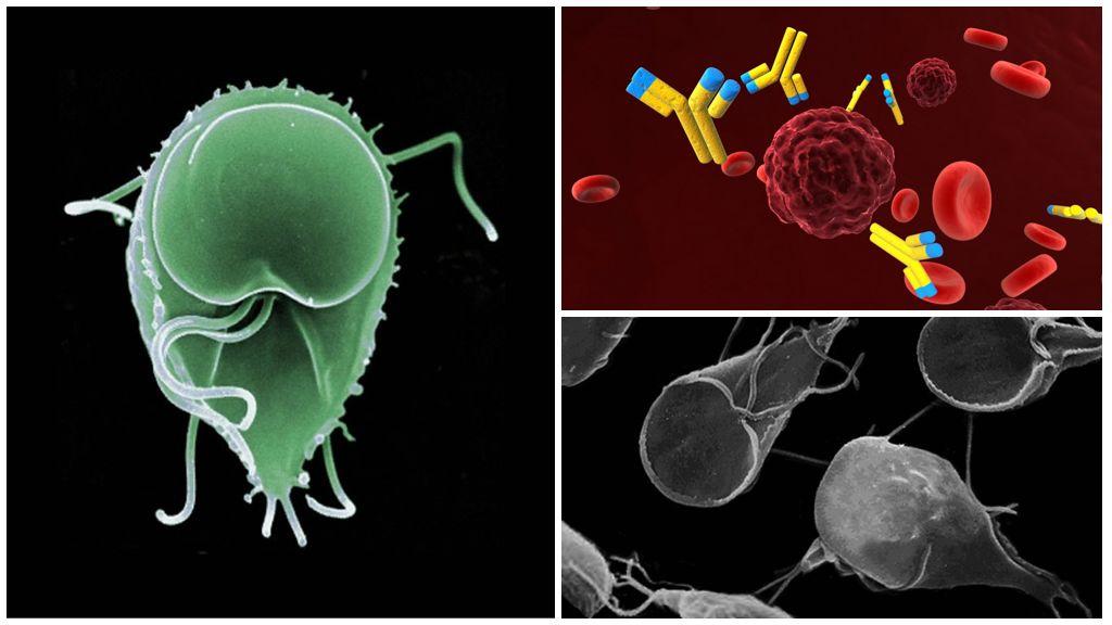 Antikörper gegen Giardia